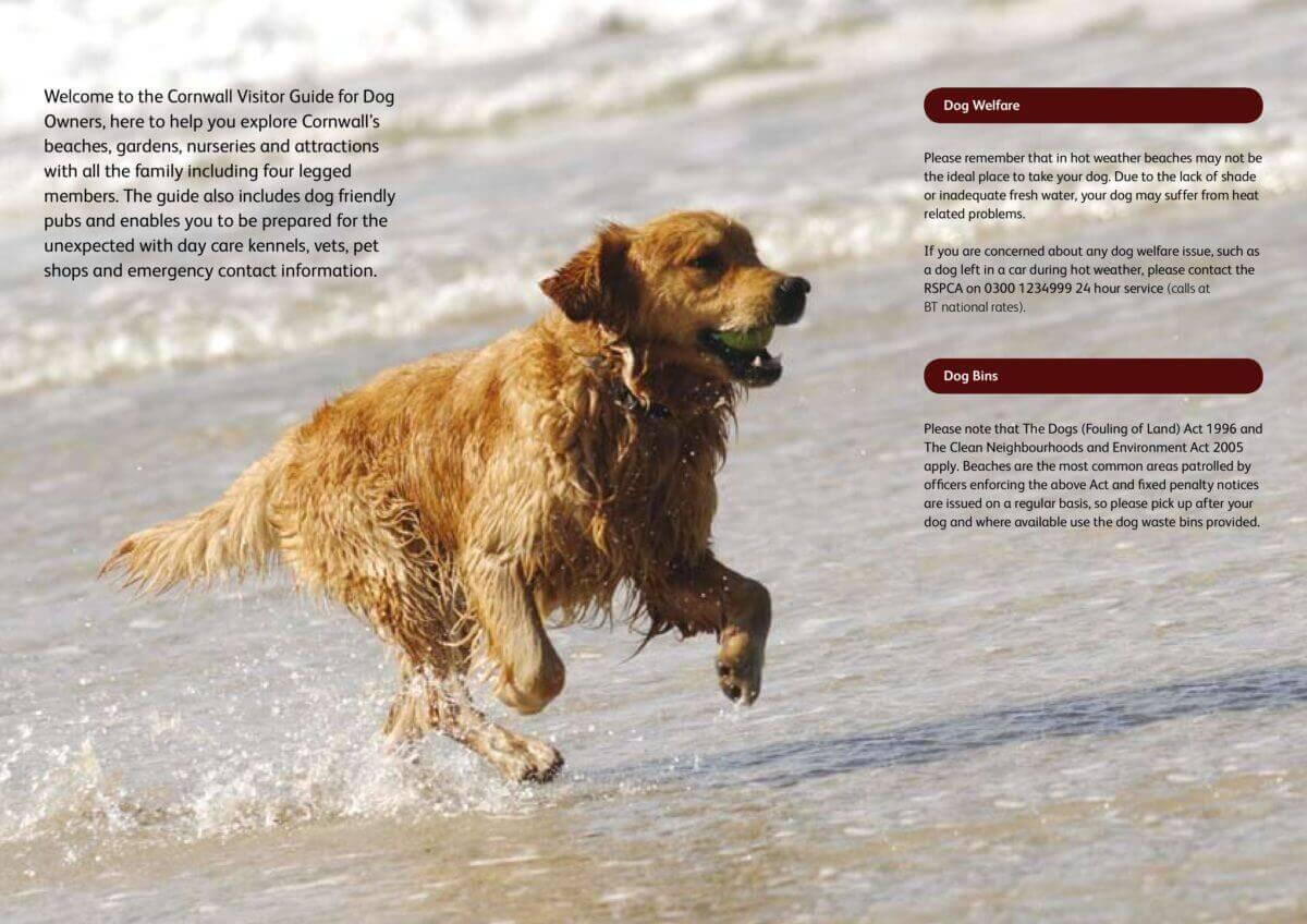 Cornwall Dog Guide 1